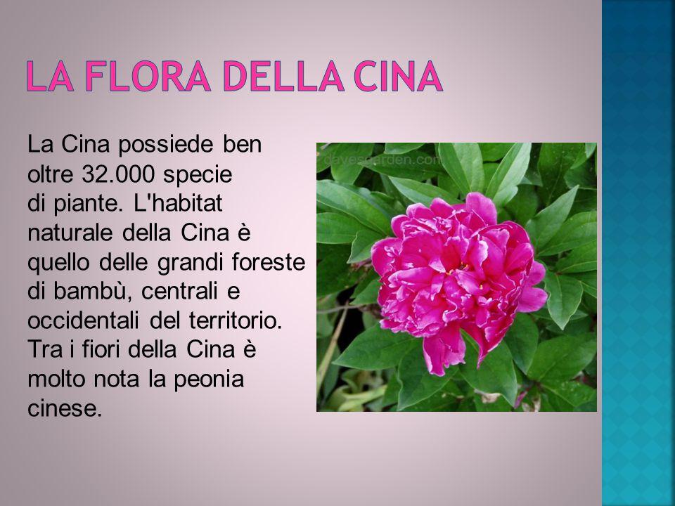 La Cina possiede ben oltre 32.000 specie di piante.