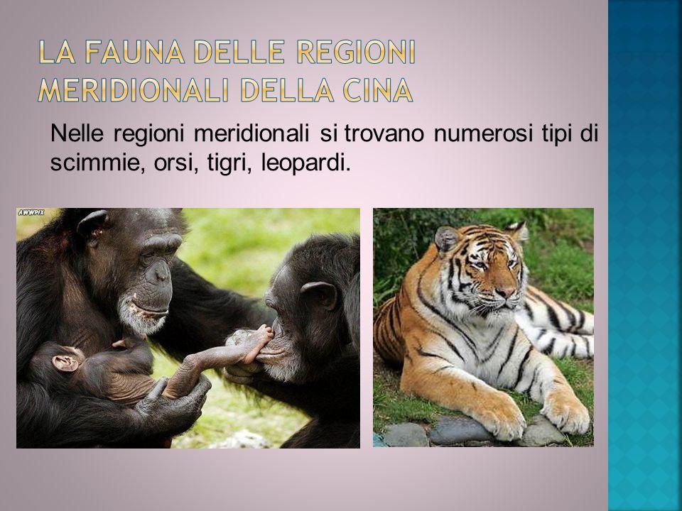 Nelle regioni meridionali si trovano numerosi tipi di scimmie, orsi, tigri, leopardi.