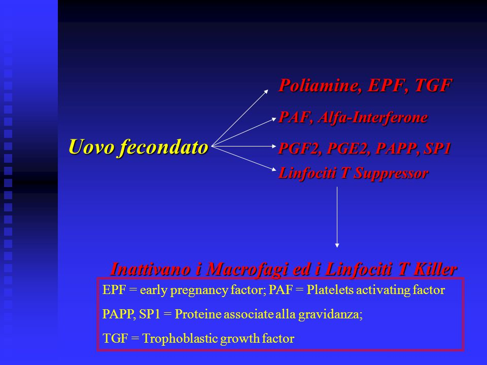 Poliamine, EPF, TGF Poliamine, EPF, TGF PAF, Alfa-Interferone PAF, Alfa-Interferone Uovo fecondato PGF2, PGE2, PAPP, SP1 Linfociti T Suppressor Linfoc