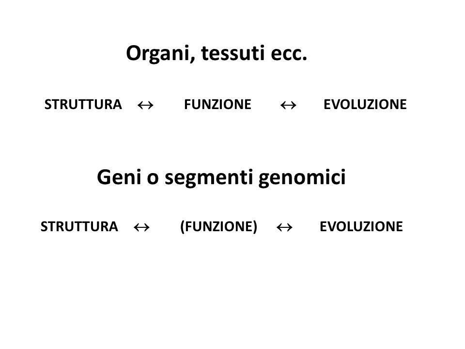 STRUTTURA  FUNZIONE  EVOLUZIONE STRUTTURA  (FUNZIONE)  EVOLUZIONE Organi, tessuti ecc. Geni o segmenti genomici