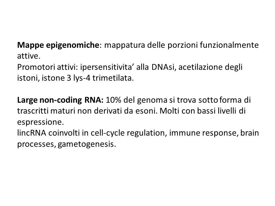 Mappe epigenomiche: mappatura delle porzioni funzionalmente attive. Promotori attivi: ipersensitivita' alla DNAsi, acetilazione degli istoni, istone 3