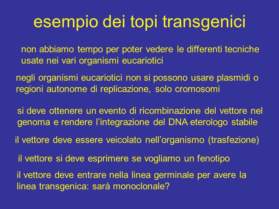 esempio dei topi transgenici non abbiamo tempo per poter vedere le differenti tecniche usate nei vari organismi eucariotici negli organismi eucariotici non si possono usare plasmidi o regioni autonome di replicazione, solo cromosomi si deve ottenere un evento di ricombinazione del vettore nel genoma e rendere l'integrazione del DNA eterologo stabile il vettore si deve esprimere se vogliamo un fenotipo il vettore deve essere veicolato nell'organismo (trasfezione) il vettore deve entrare nella linea germinale per avere la linea transgenica: sarà monoclonale