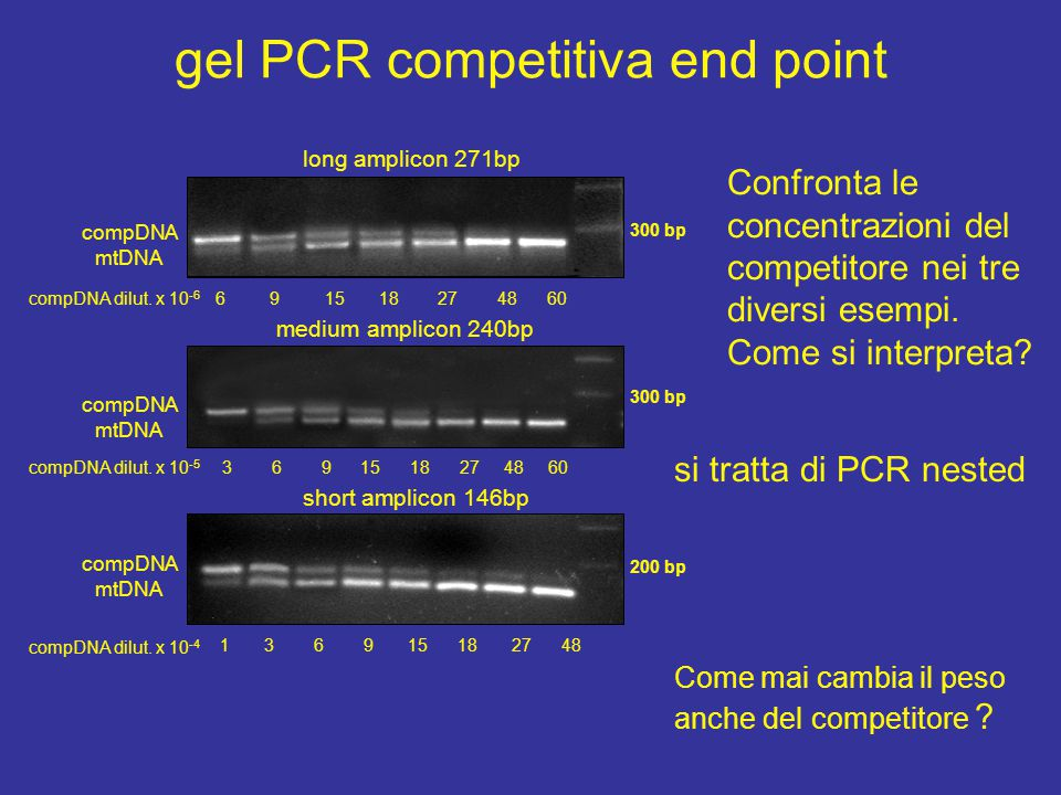 gel PCR competitiva end point long amplicon 271bp medium amplicon 240bp short amplicon 146bp 300 bp 200 bp compDNA mtDNA 6 9 15 18 27 48 60 3 6 9 15 18 27 48 60 1 3 6 9 15 18 27 48 compDNA mtDNA compDNA mtDNA compDNA dilut.
