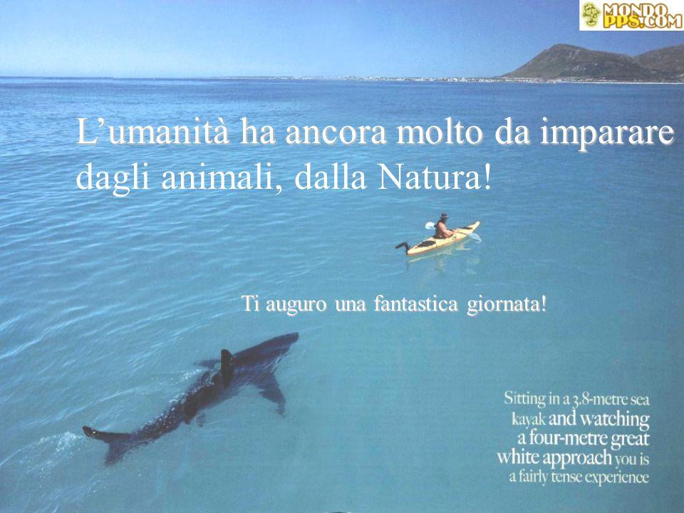 L'umanità ha ancora molto da imparare dagli animali, dalla Natura.