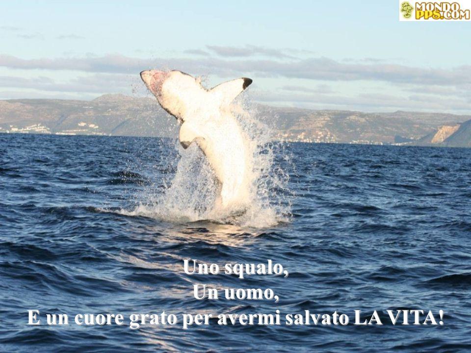 Uno squalo, Un uomo, E un cuore grato per avermi salvato LA VITA!