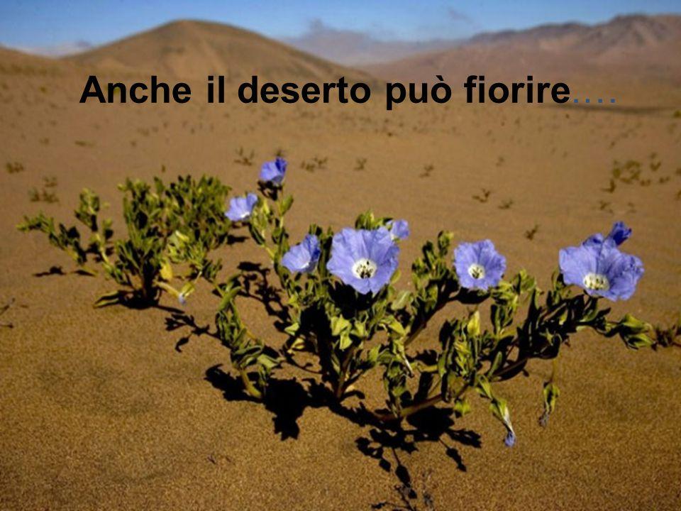 Anche il deserto può fiorire.…
