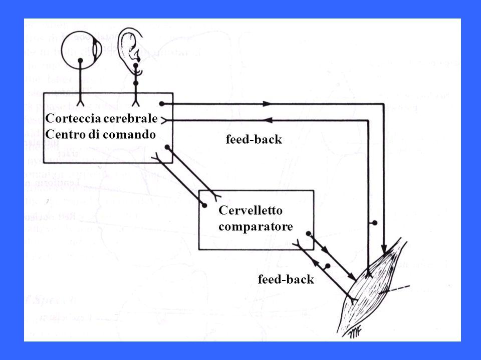 Cervelletto comparatore feed-back Corteccia cerebrale Centro di comando