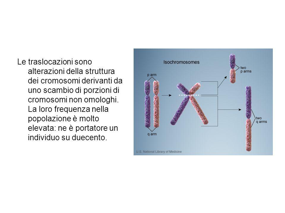 Le traslocazioni sono alterazioni della struttura dei cromosomi derivanti da uno scambio di porzioni di cromosomi non omologhi. La loro frequenza nell