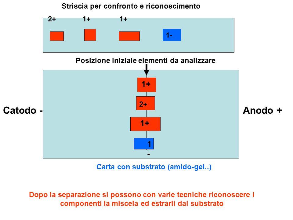 Catodo -Anodo + Carta con substrato (amido-gel..) Posizione iniziale elementi da analizzare 1+ 2+ 1+ 1-1- Dopo la separazione si possono con varie tec