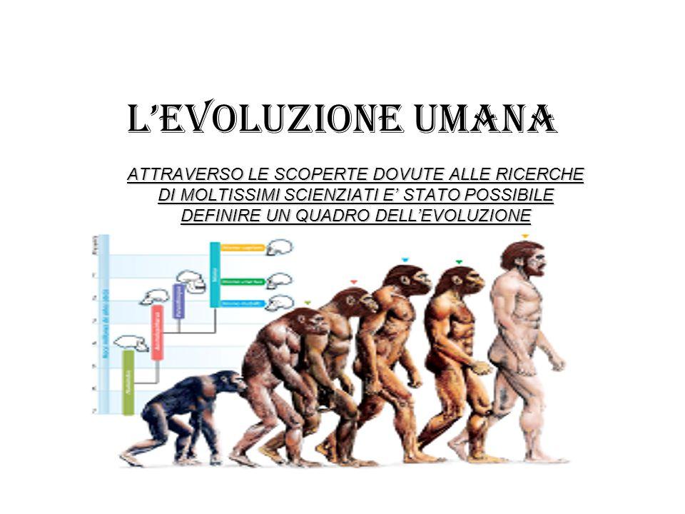 L'EVOLUZIONE UMANA ATTRAVERSO LE SCOPERTE DOVUTE ALLE RICERCHE DI MOLTISSIMI SCIENZIATI E' STATO POSSIBILE DEFINIRE UN QUADRO DELL'EVOLUZIONE