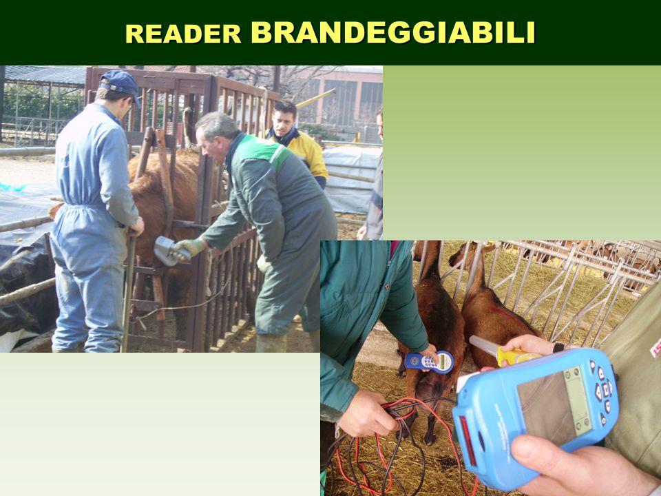 READER BRANDEGGIABILI