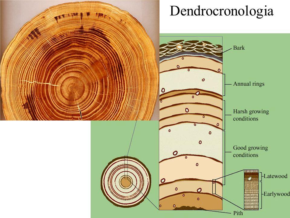 Dendrocronologia