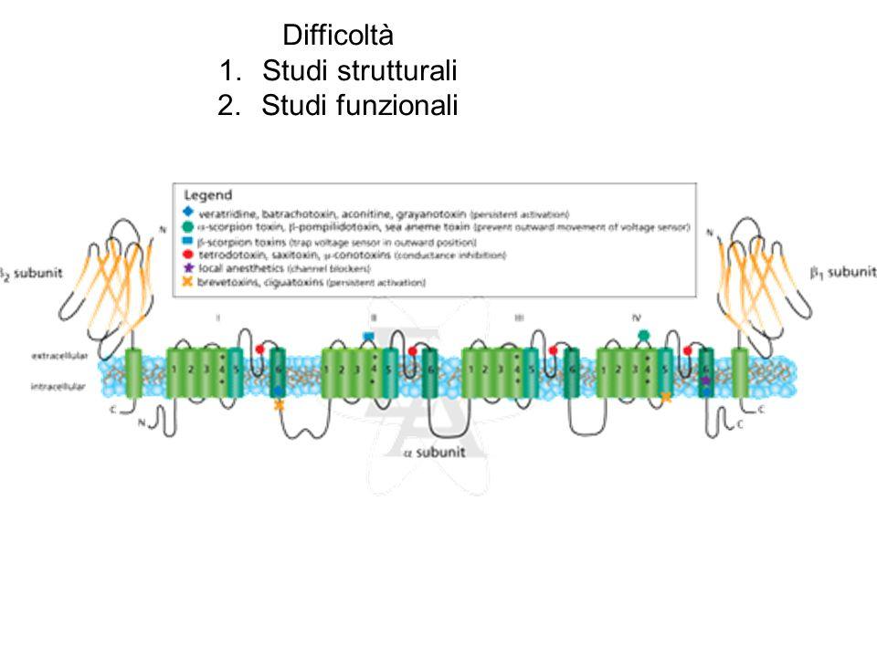 Difficoltà 1.Studi strutturali 2.Studi funzionali