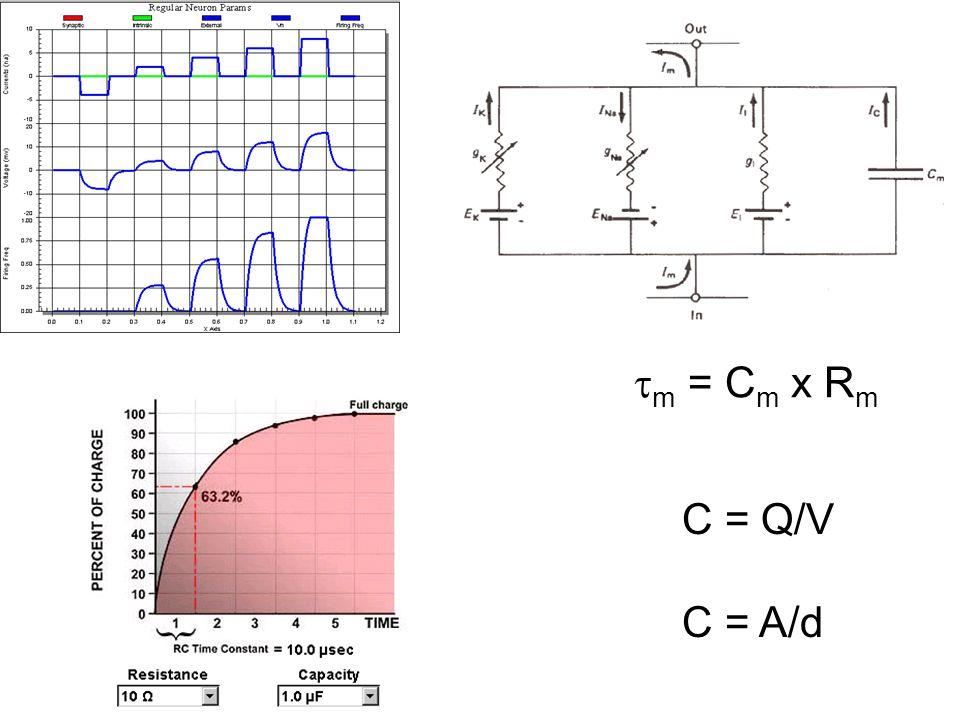 C = Q/V C = A/d  m = C m x R m