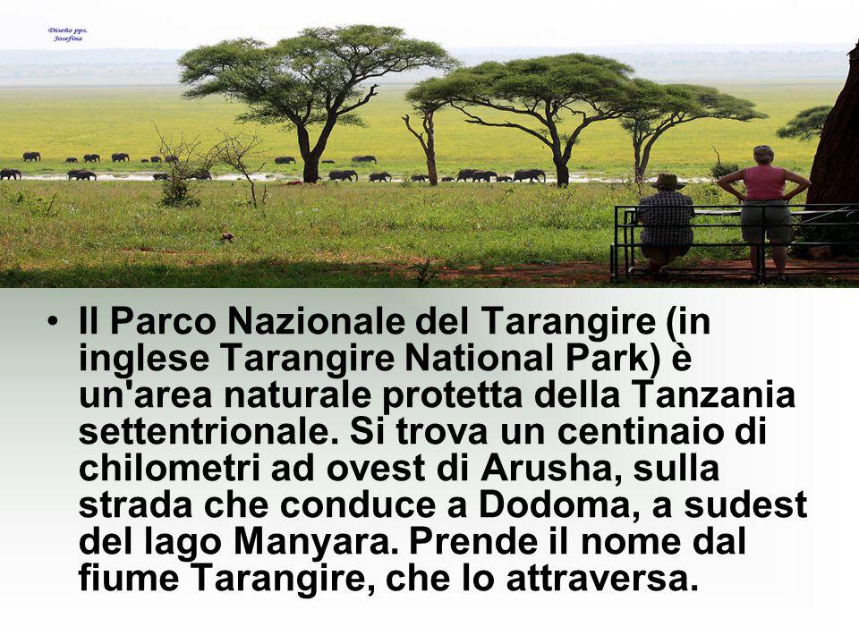 Il Parco Nazionale del Tarangire (in inglese Tarangire National Park) è un area naturale protetta della Tanzania settentrionale.