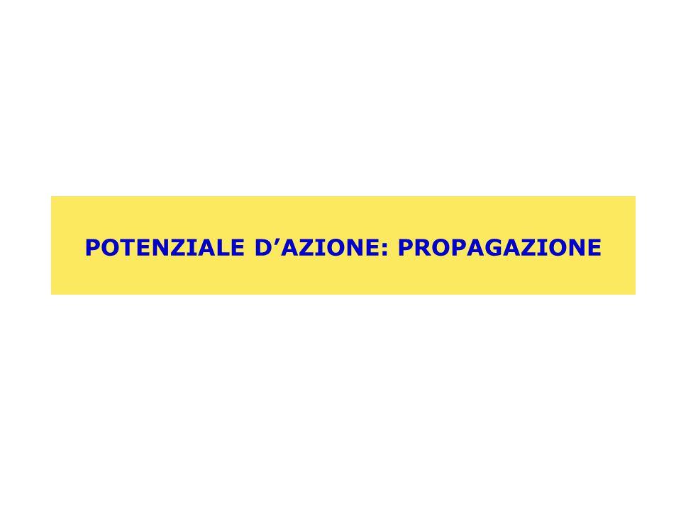 POTENZIALE D'AZIONE: PROPAGAZIONE