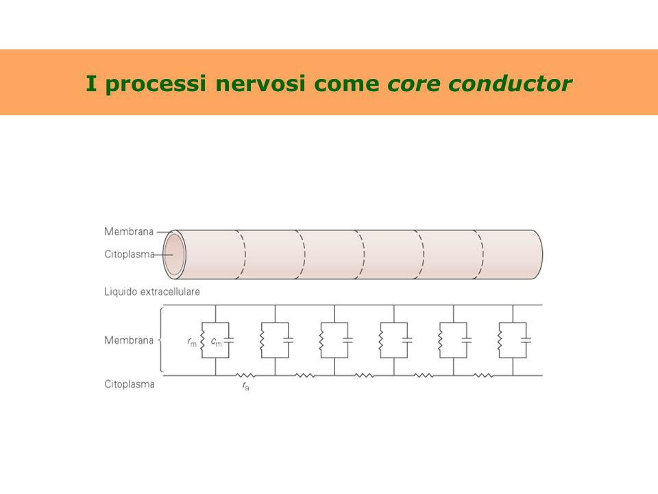 I processi nervosi come core conductor