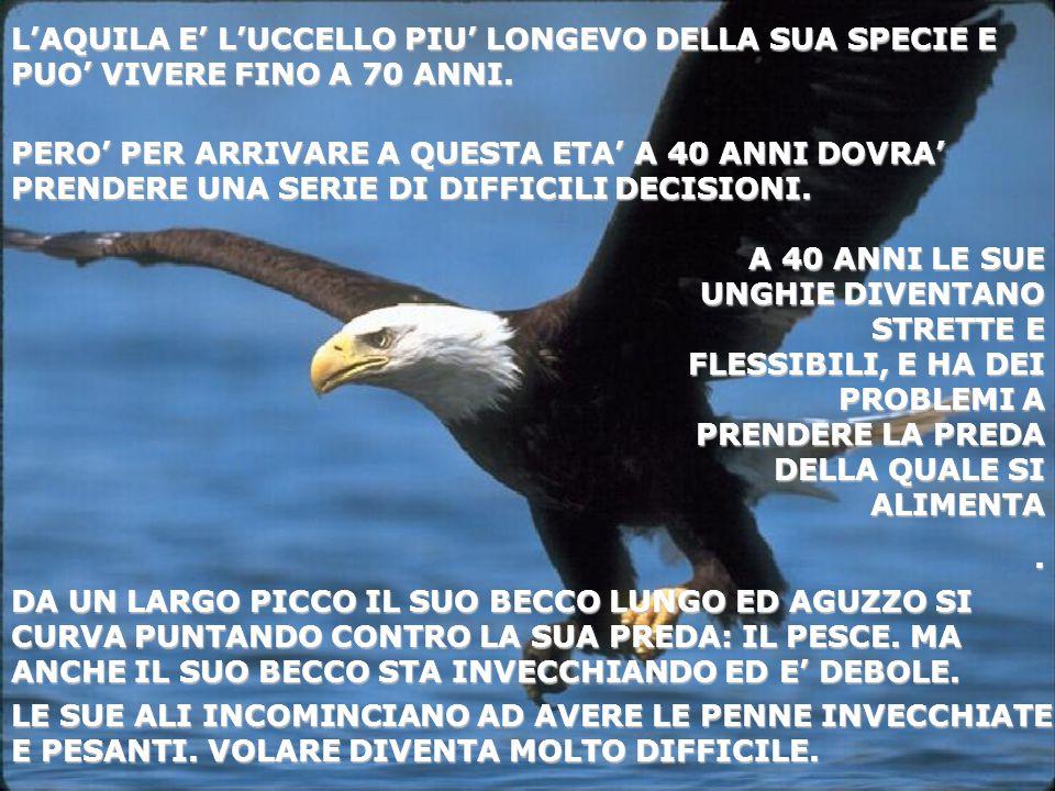 L'AQUILA E' L'UCCELLO PIU' LONGEVO DELLA SUA SPECIE E PUO' VIVERE FINO A 70 ANNI. LE SUE ALI INCOMINCIANO AD AVERE LE PENNE INVECCHIATE E PESANTI. VOL