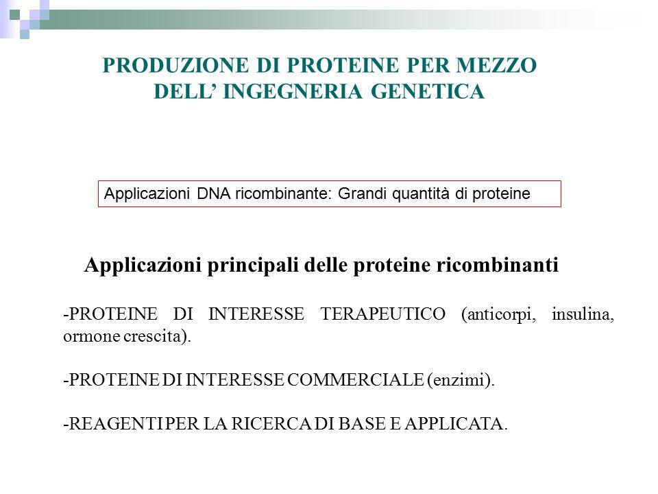 PRODUZIONE DI PROTEINE PER MEZZO DELL' INGEGNERIA GENETICA -PROTEINE DI INTERESSE TERAPEUTICO (anticorpi, insulina, ormone crescita). -PROTEINE DI INT