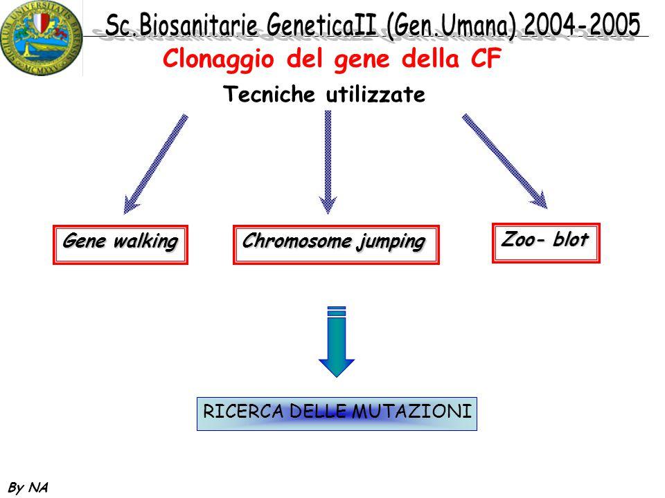 By NA Tecniche utilizzate Gene walking Chromosome jumping Zoo- blot RICERCA DELLE MUTAZIONI Clonaggio del gene della CF