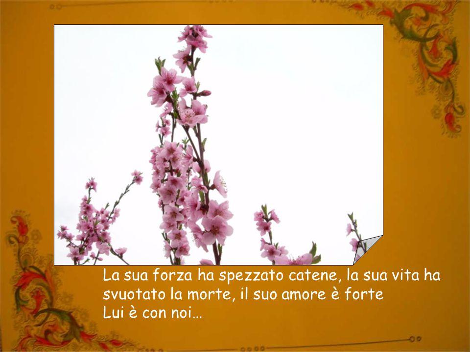 Testi: (canto liturgico di pasqua: Risvegliate l'aurora); Si è destato dai morti Inno della Commissione francofona cistercense).