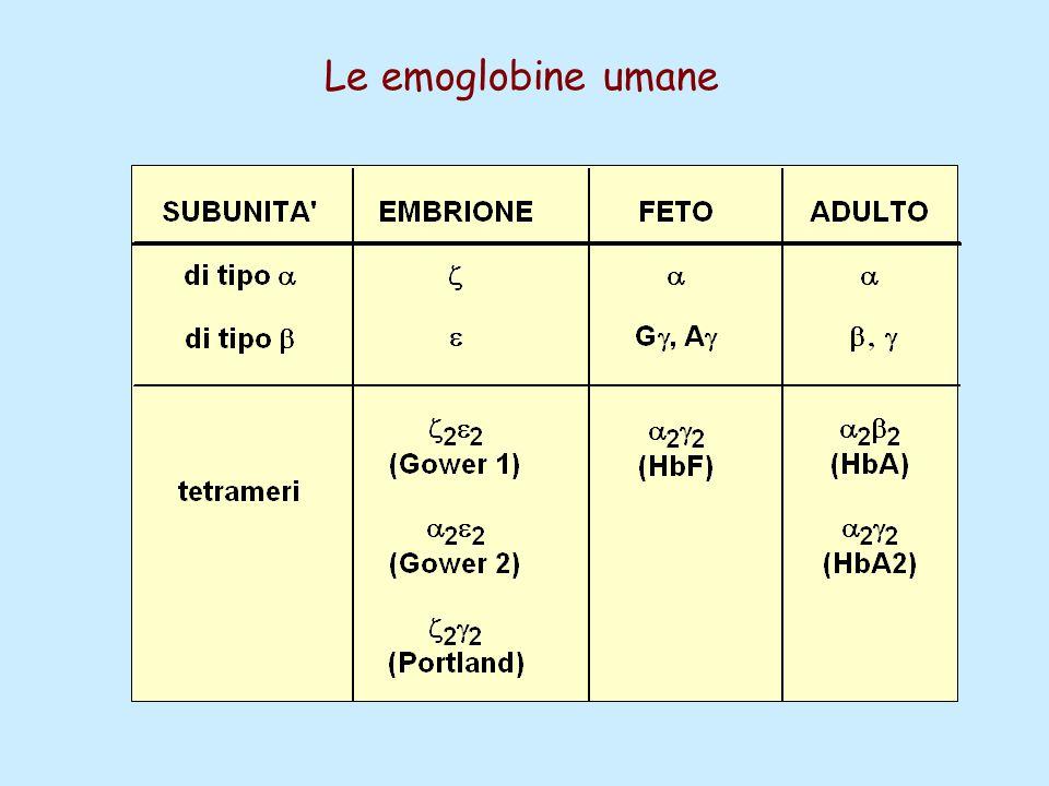 Le emoglobine umane