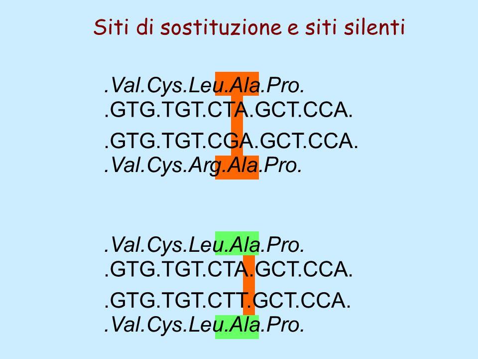 .GTG.TGT.CGA.GCT.CCA..GTG.TGT.CTA.GCT.CCA..GTG.TGT.CTT.GCT.CCA..GTG.TGT.CTA.GCT.CCA..Val.Cys.Arg.Ala.Pro..Val.Cys.Leu.Ala.Pro. Siti di sostituzione e