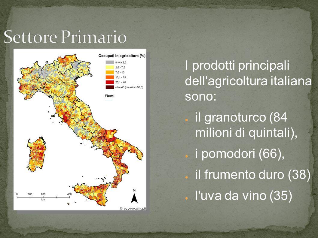 I prodotti principali dell agricoltura italiana sono: ● il granoturco (84 milioni di quintali), ● i pomodori (66), ● il frumento duro (38) ● l uva da vino (35)