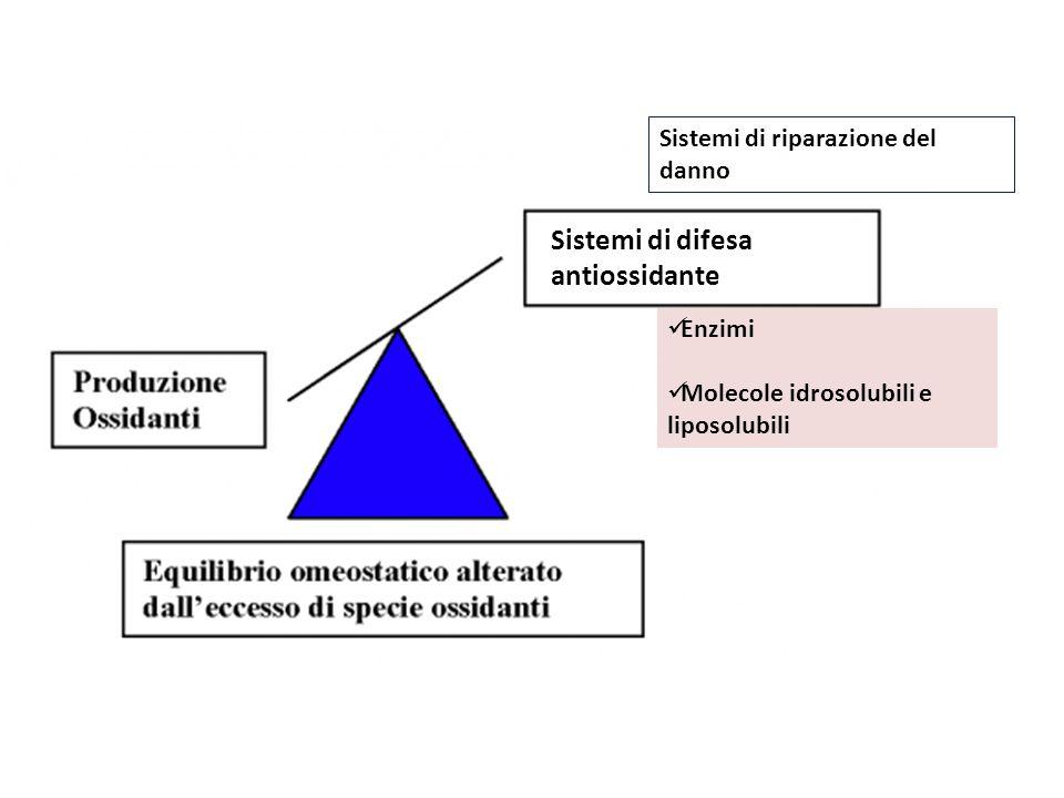Sistemi di difesa antiossidante Enzimi Molecole idrosolubili e liposolubili Sistemi di riparazione del danno