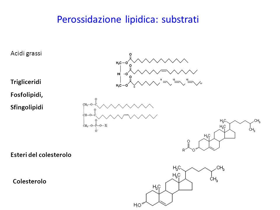 Perossidazione lipidica: substrati Acidi grassi Trigliceridi Fosfolipidi, Sfingolipidi Esteri del colesterolo Colesterolo