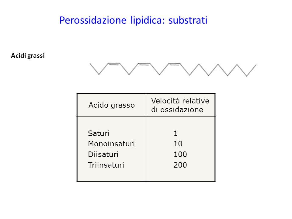 Perossidazione lipidica: substrati Acidi grassi Acido grasso Velocità relative di ossidazione Saturi Monoinsaturi Diisaturi Triinsaturi 1 10 100 200