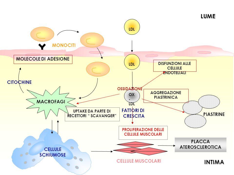 LDL OX - LDL OSSIDAZIONE PLACCA ATEROSCLEROTICA DISFUNZIONI ALLE CELLULE ENDOTELIALI PIASTRINE AGGREGAZIONE PIASTRINICA LUME LUMEINTIMA LDL FATTORI DI