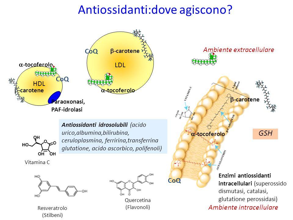 Enzimi antiossidanti intracellulari (superossido dismutasi, catalasi, glutatione perossidasi) Antiossidanti:dove agiscono? Antiossidanti idrosolubili
