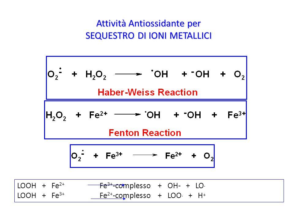 Attività Antiossidante per SEQUESTRO DI IONI METALLICI LOOH + Fe 2+ Fe 3+ -complesso + OH- + LO. LOOH + Fe 3+ Fe 2+ -complesso + LOO. + H +