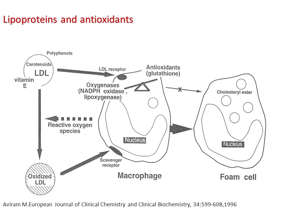 Lipoproteins and antioxidants Aviram M.European Journal of Clinical Chemistry and Clinical Biochemistry, 34:599-608,1996