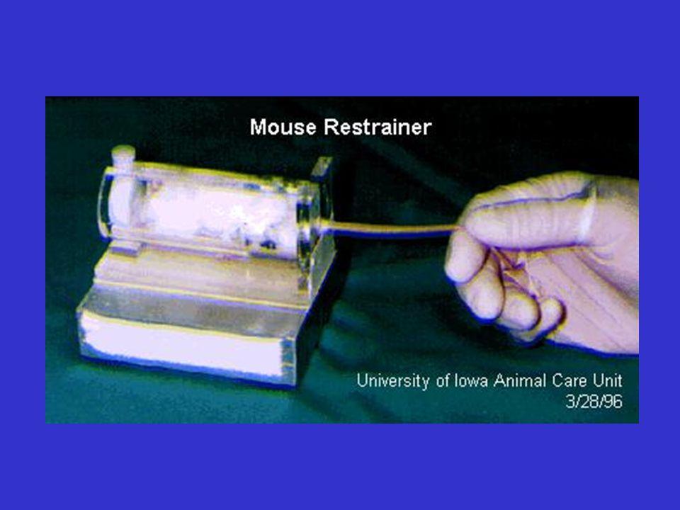 SOMMINISTRAZIONE ENDOVENOSA (ratto) Volume max per un ratto di 250g: 0.5 ml