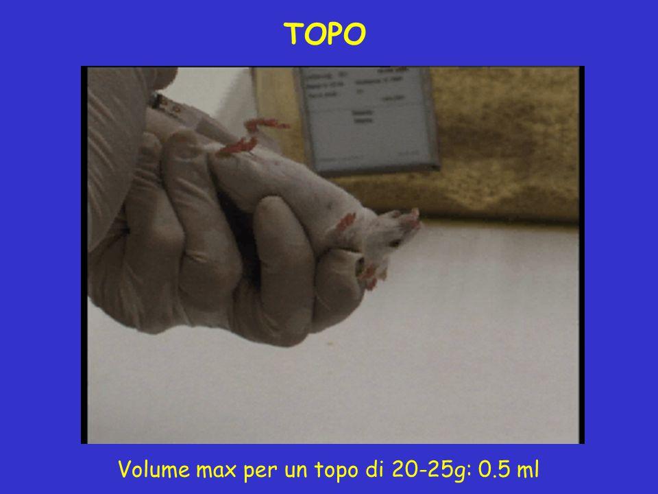 TOPO Volume max per un topo di 20-25g: 0.5 ml