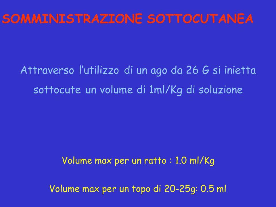 Attraverso l'utilizzo di un ago da 26 G si inietta sottocute un volume di 1ml/Kg di soluzione SOMMINISTRAZIONE SOTTOCUTANEA Volume max per un topo di