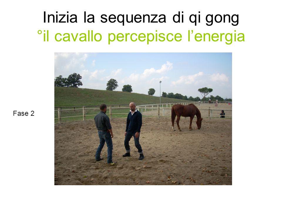 Inizia la sequenza di qi gong °il cavallo percepisce l'energia Fase 2