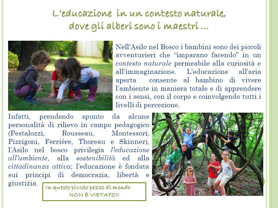 """. In questo piccolo pezzo di mondo NON È VIETATO!! Nell'Asilo nel Bosco i bambini sono dei piccoli avventurieri che """"imparano facendo"""" in un contesto"""