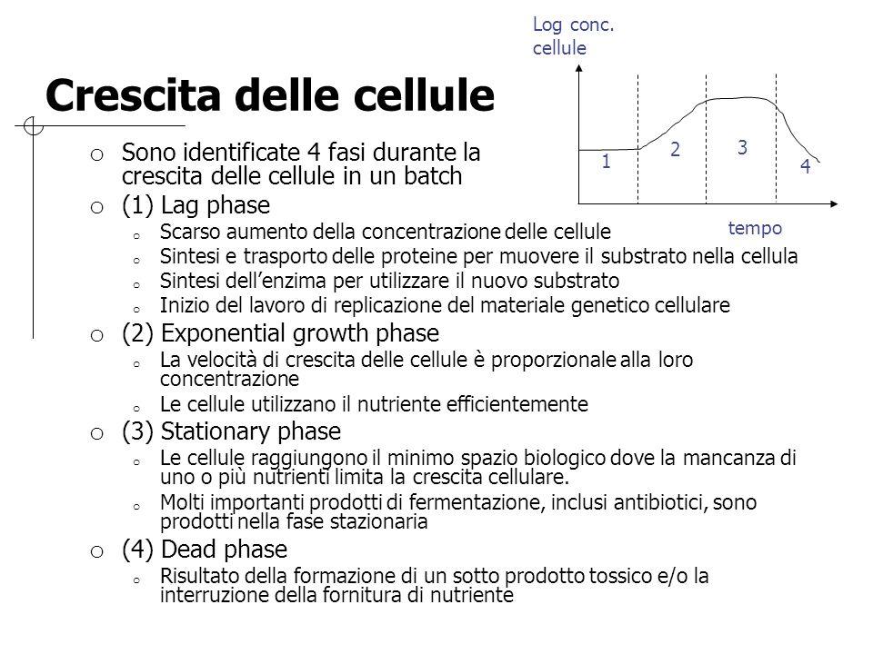 Crescita delle cellule o Sono identificate 4 fasi durante la crescita delle cellule in un batch o (1) Lag phase o Scarso aumento della concentrazione