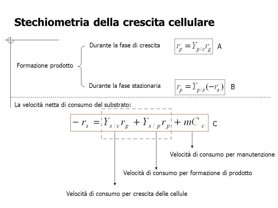 Formazione prodotto Durante la fase di crescita Durante la fase stazionaria La velocità netta di consumo del substrato: Velocità di consumo per cresci