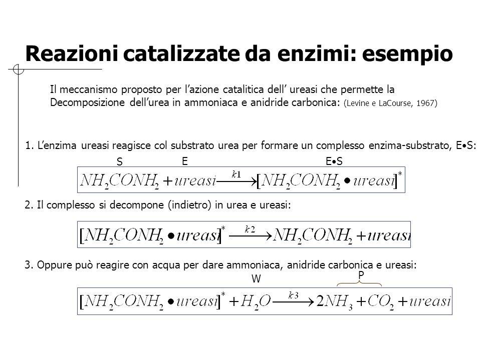 Reazioni catalizzate da enzimi: esempio Il meccanismo proposto per l'azione catalitica dell' ureasi che permette la Decomposizione dell'urea in ammoni