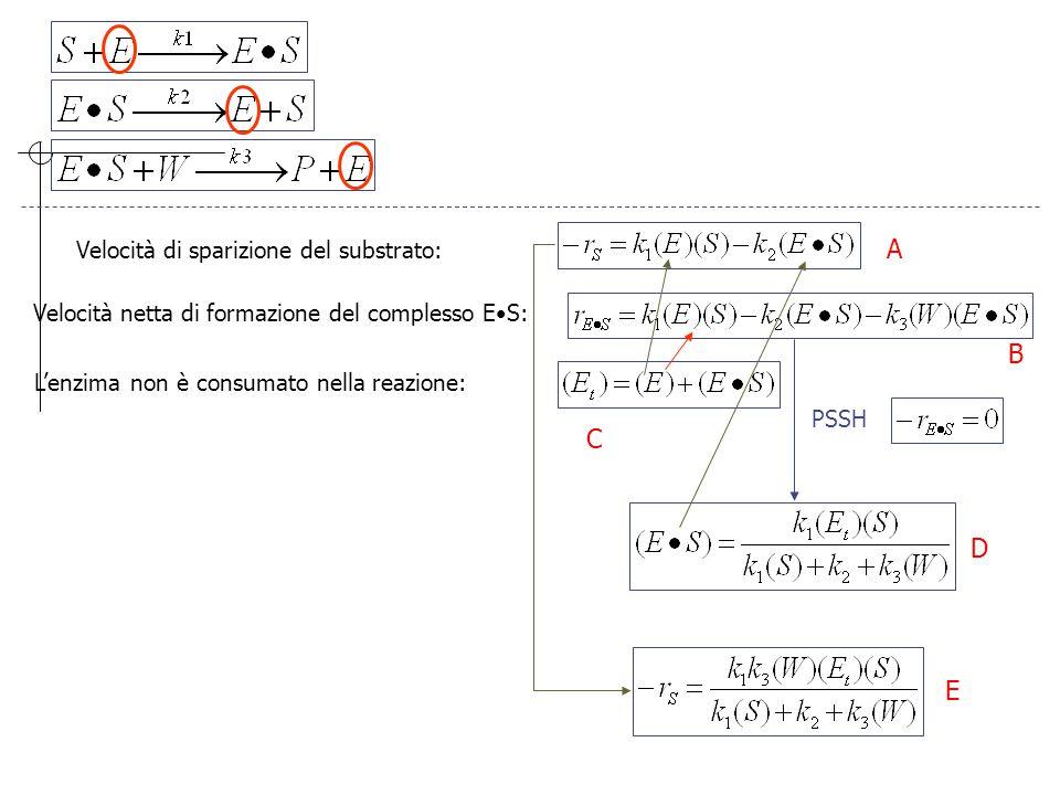 Poiché la reazione viene condotto in soluzione acquosa: (W) ~ costante k' 3 Questa è la forma della Equazione di Michaelis-Menten E K m è detta la costante di Michaelis V max (S) -r S V max A bassa concentrazione di substrato: (S) << K m Ad alta concentrazione di substrato: (S) >> K m Caso speciale in cui V max /2 KmKm K m è uguale alla concentrazione del substrato alla quale la velocità di reazione è uguale alla metà della velocità massima A B B' B''