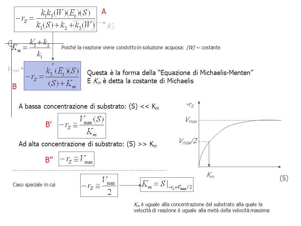 """Poiché la reazione viene condotto in soluzione acquosa: (W) ~ costante k' 3 Questa è la forma della """"Equazione di Michaelis-Menten"""" E K m è detta la c"""