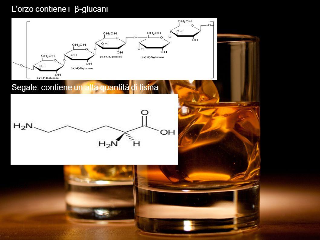 L orzo contiene i β-glucani Segale: contiene un alta quantità di lisina Mais: