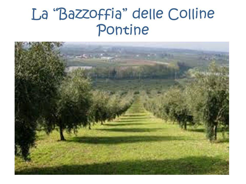 """La """"Bazzoffia"""" delle Colline Pontine"""