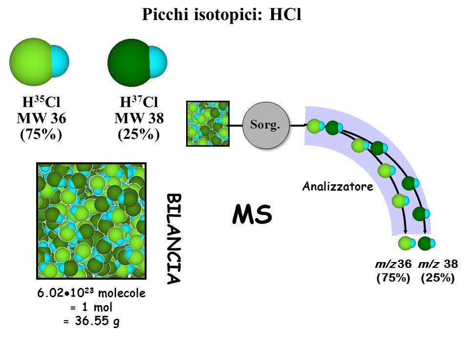 H 35 Cl MW 36 (75%) H 37 Cl MW 38 (25%) Picchi isotopici: HCl m/z 36 (75%) m/z 38 (25%) Sorg. Analizzatore MS 6.02  10 23 molecole = 1 mol = 36.55 g