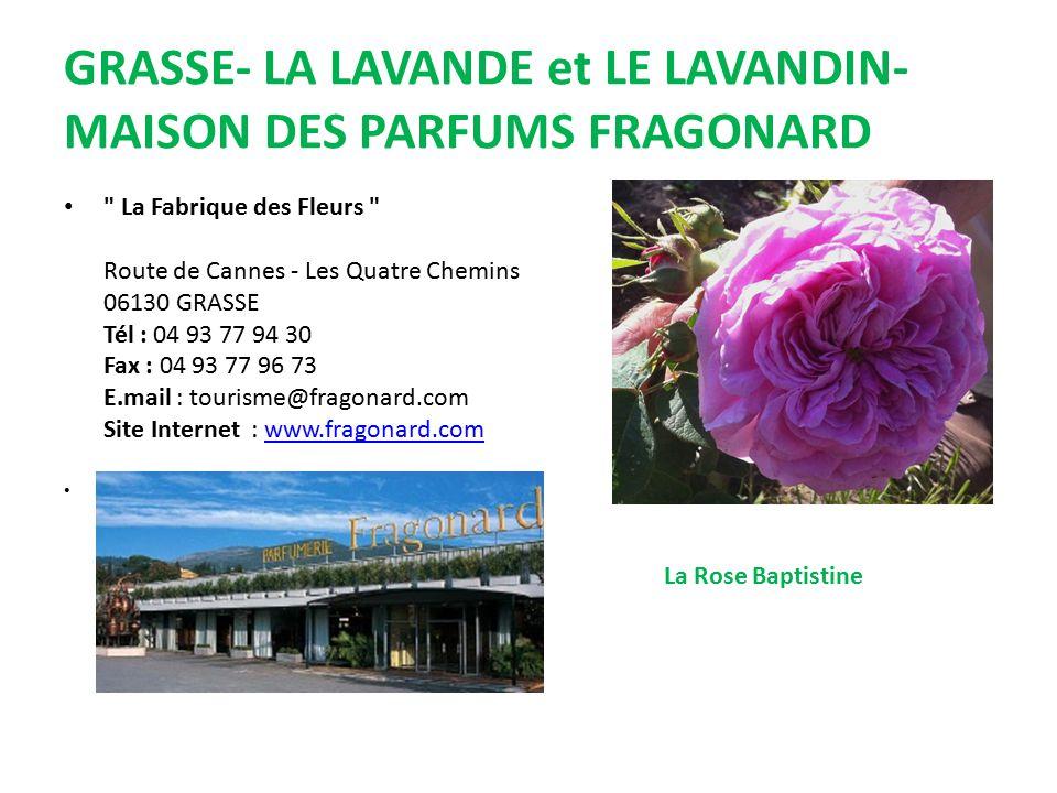 GRASSE- LA LAVANDE et LE LAVANDIN- MAISON DES PARFUMS FRAGONARD