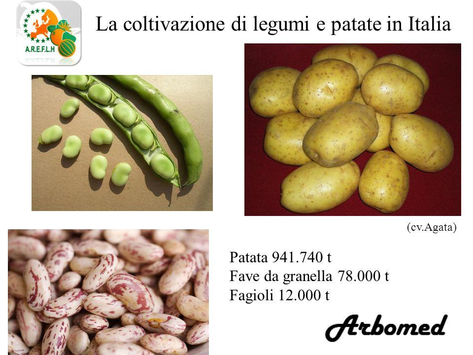 La coltivazione di legumi e patate in Italia Patata 941.740 t Fave da granella 78.000 t Fagioli 12.000 t (cv.Agata)